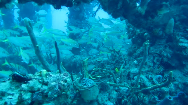scuba diving with the local fish of fort lauderdale in south florida united states scuba diving in south florida on march 18 2013 in fort lauderdale... - scuba diving stock videos & royalty-free footage