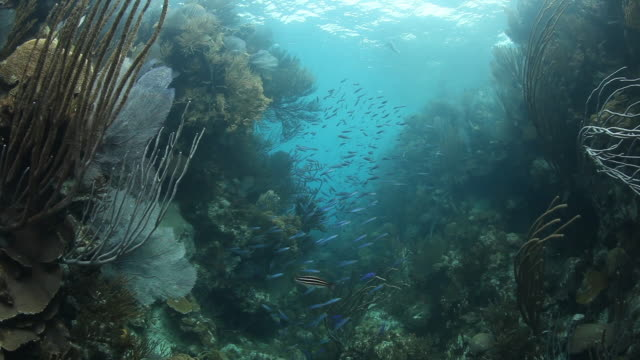 Scuba POV, school of fish in tropical reef