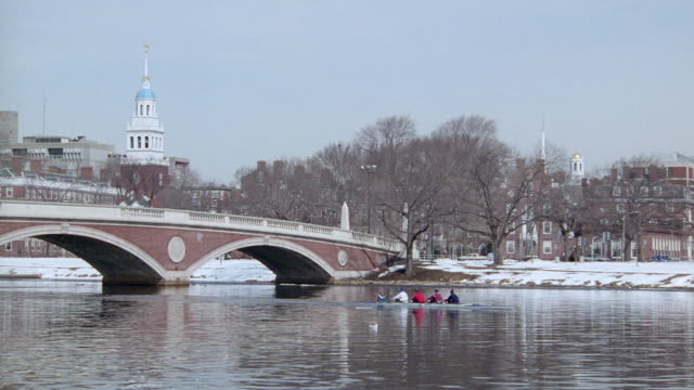 scullers row under the weeks memorial bridge on the charles river. - charles river stock videos & royalty-free footage