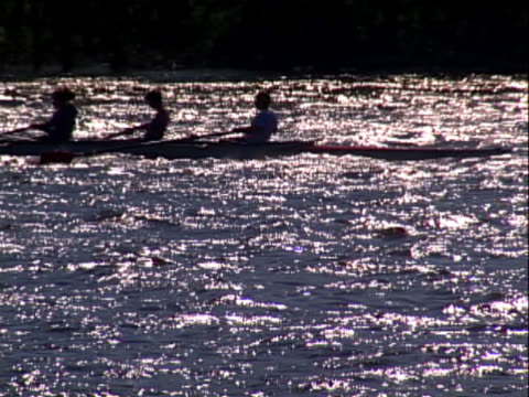sculling boat and crew - sculling video stock e b–roll