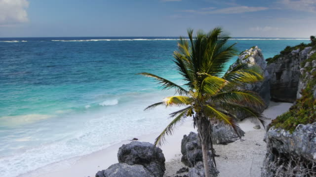 sea and coconut palm - tulum mexico stock videos & royalty-free footage