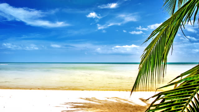 sea and palm tree - caribbean stock videos & royalty-free footage