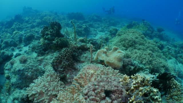 Sea anemone, coral reef undersea, Taiwan