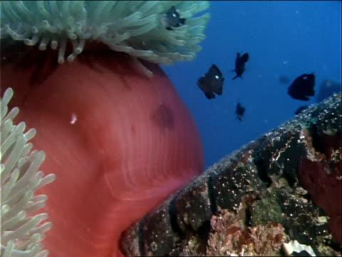 vídeos y material grabado en eventos de stock de a sea anemone grows on a tire. - simbiosis
