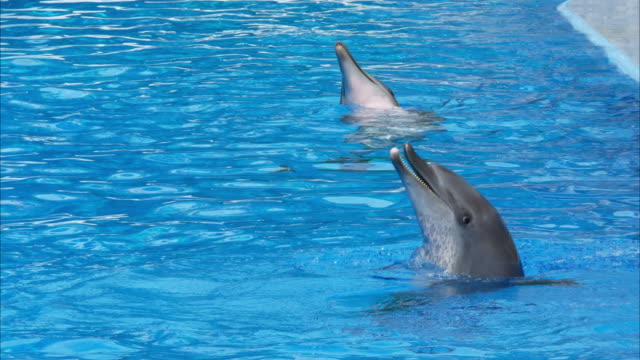 sea animal , dolphin - pleading stock videos & royalty-free footage