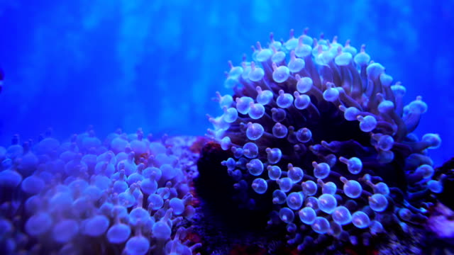 sea animals - sea anemone stock videos and b-roll footage