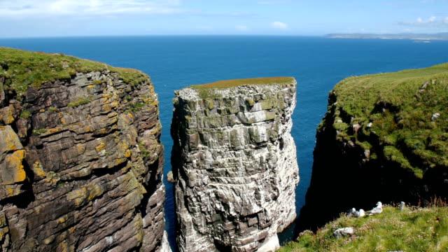 Sea Bird colony nesting on huge rock, Handa Island, Scotland