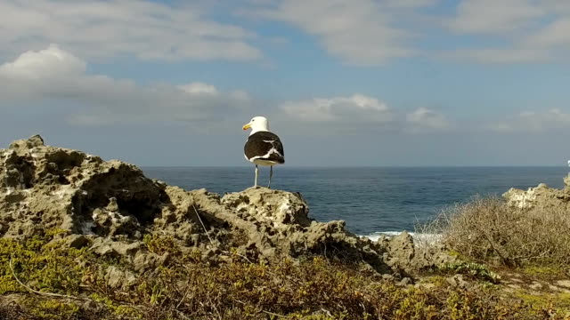 Sea bird taking flight Slow Motion