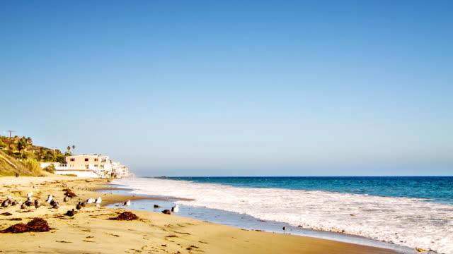 stockvideo's en b-roll-footage met sea, birds and house on the beach - laguna beach californië