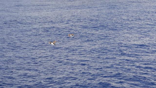 Zeevogels, blauwe oceaanoppervlak