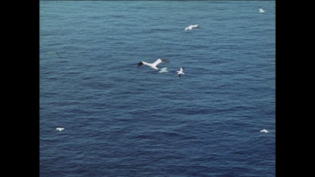 MONTAGE Sea birds fly over the British coast / UK