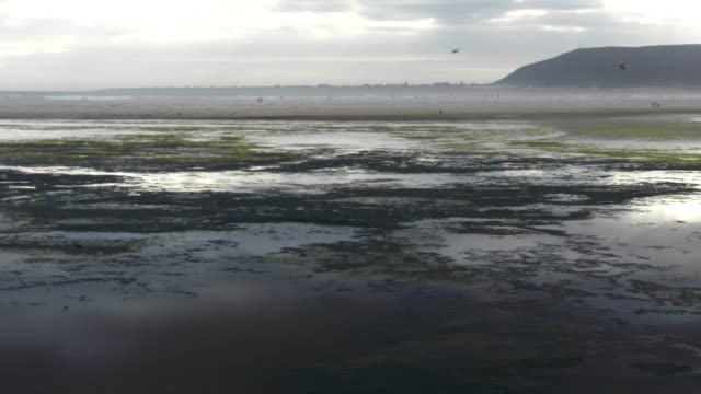 sea birds flying over the estuary river mouth - algae stock videos & royalty-free footage