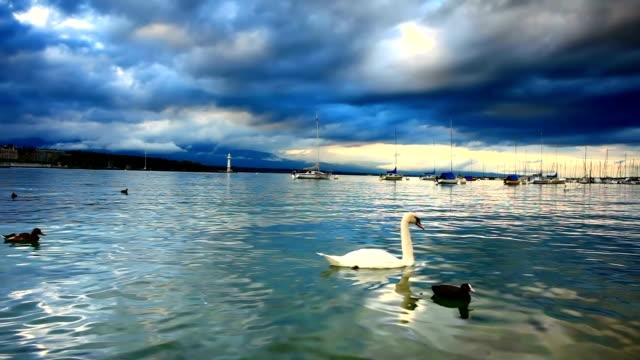 sea Vögel auf den Genfer See und Sturm kommt