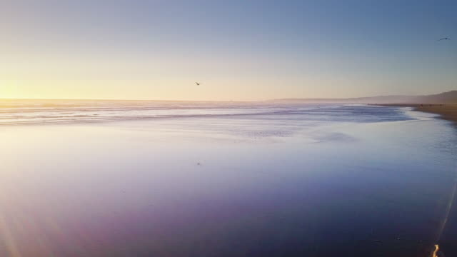 sea birds on remote beach on washington coast - aerial shot - coastline stock videos & royalty-free footage
