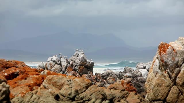 il mare uccelli seduta sulle rocce con mare increspato in background - rock video stock e b–roll