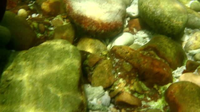 vídeos de stock, filmes e b-roll de base do mar - fundo do mar