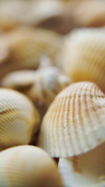 sea cockleshells - aquatic organism stock videos & royalty-free footage