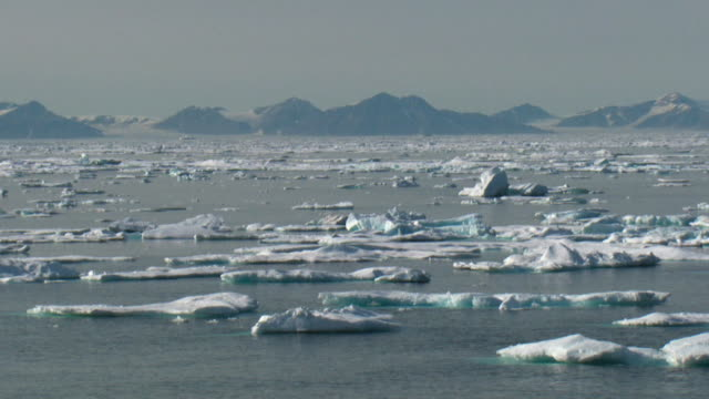 ws sea covered with ice floes, snow capped mountains in distance, nunavut, canada - northwest passage stock videos and b-roll footage