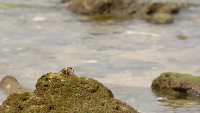 sea crab - rocky coastline stock videos & royalty-free footage