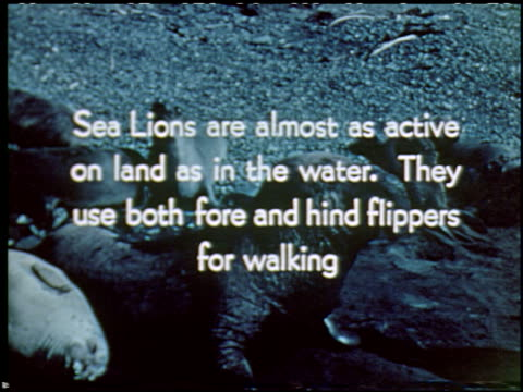 sea elephants and sea lions - 16 of 16 - sea elephants and sea lions film title stock videos & royalty-free footage