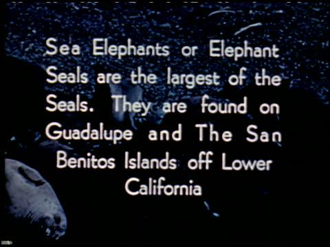 sea elephants and sea lions - 2 of 16 - sea elephants and sea lions film title stock videos & royalty-free footage