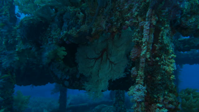 sea fan coral grow on steel artificial reef - steel stock videos & royalty-free footage