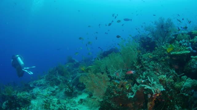 sea fan (gorgonian) coral, scuba diving - gorgonian coral stock videos & royalty-free footage