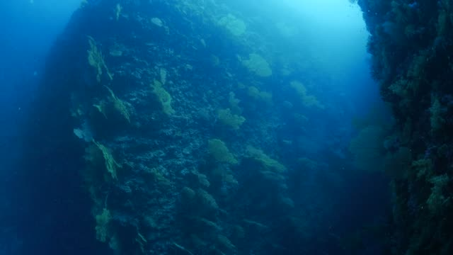 sea fan gorgonian coral forest on undersea rock mountain - gorgonian coral stock videos & royalty-free footage