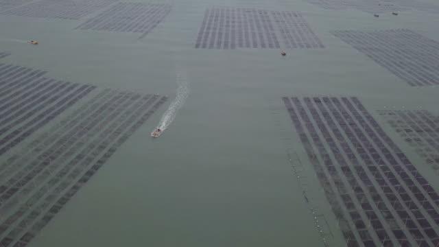 sea farm vid solnedgången, xiapu, fujian, kina - tång bildbanksvideor och videomaterial från bakom kulisserna