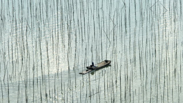 sea farm at sunset, xiapu, fujian, china - seaweed stock videos & royalty-free footage