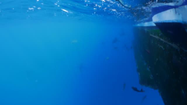 sea fish and shark swimming swimming under boat, galapagos - galapagos shark stock videos & royalty-free footage