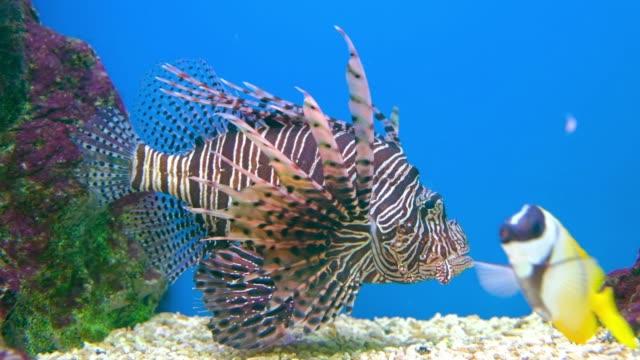 sea fish life in aquarium tank