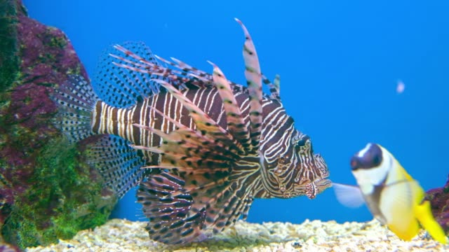 sea fish life in aquarium tank - pesce video stock e b–roll