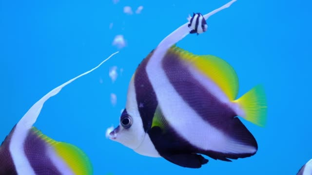 sea fish life in aquarium tank - tropical fish stock videos & royalty-free footage