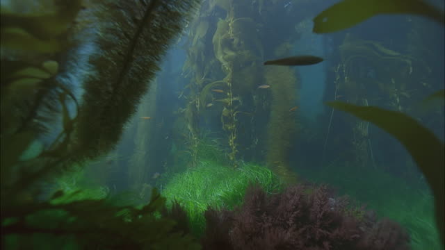 slo mo cu sea floor with variety of underwater plants / moorea, tahiti, french polynesia - sea grass plant点の映像素材/bロール