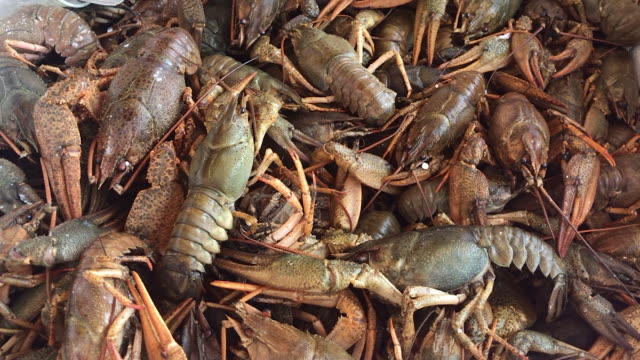 sea food background - lobster stock videos & royalty-free footage