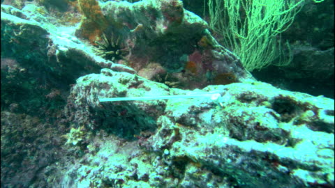 stockvideo's en b-roll-footage met sea grass and corals characterize a rocky cliff underwater. - sea grass plant