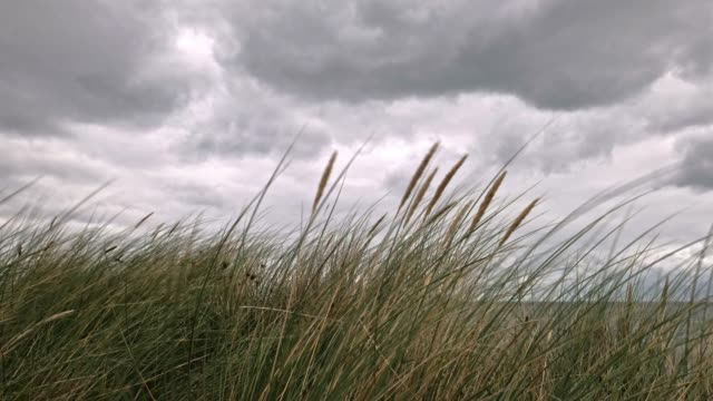 sea grass and storm clouds - sand stock videos & royalty-free footage