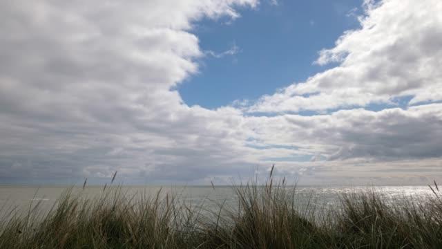 sea grass, sea and sunshine - sea grass plant stock videos & royalty-free footage