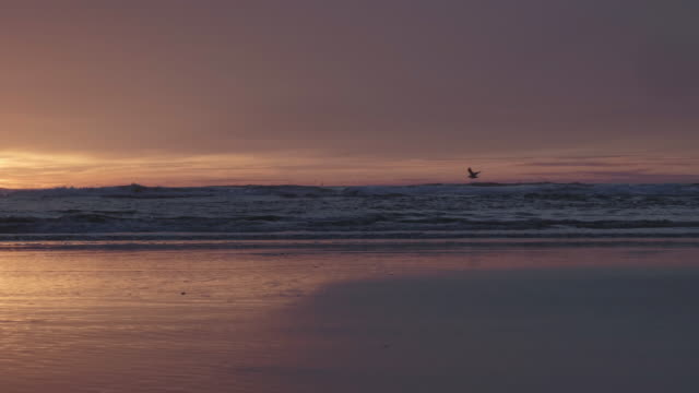 stockvideo's en b-roll-footage met sea gull vliegen langs de kustlijn bij zonsondergang - oregon coast