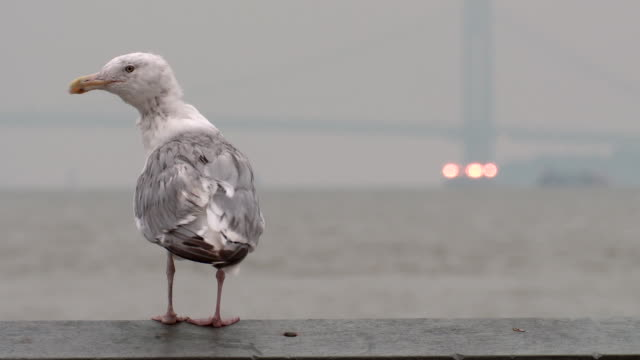 A sea gull sits on a railing and flies away.  The Hudson River and the George Washington Bridge are behind.