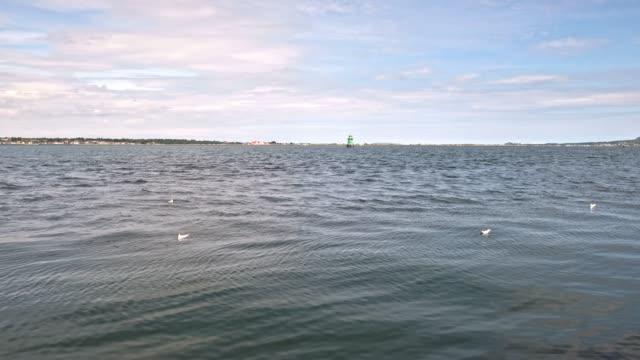 sea gulls at dublin port - catherine macbride stock videos & royalty-free footage