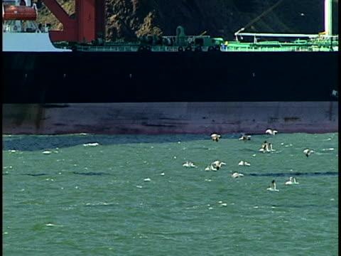 stockvideo's en b-roll-footage met sea gulls - in het water levend organisme