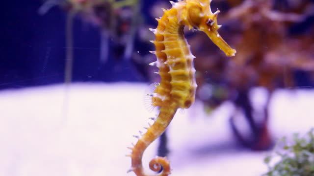 sea horse. - aquarium stock videos and b-roll footage
