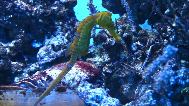 sea horse - pipefish stock videos & royalty-free footage