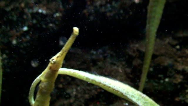 stockvideo's en b-roll-footage met sea horse - zeepaardje