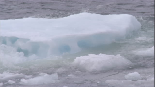 sea ice bobs on arctic ocean. available in hd. - arctic stock videos and b-roll footage