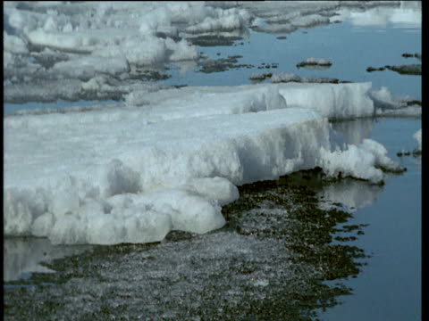 "vidéos et rushes de sea ice grinds up over land, arctic bay, canada - ""bbc natural history"""