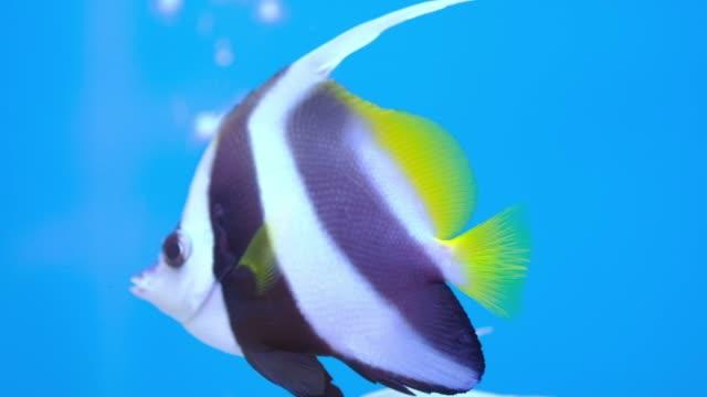 vídeos de stock e filmes b-roll de sea life in aquarium, fish swimming - aquário edifício para cativeiro animal