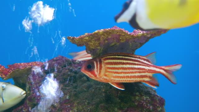 zeeleven in aquarium tank